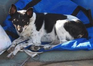 Touring companion on Orange River rafting.