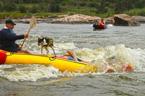 Raft surfing river rafting Parys
